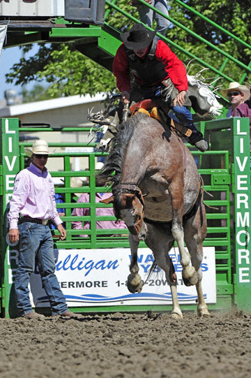 blog (4x6@300) Yoko 76 Livermore, Saddle Bronco 4, Taylor Cambra (NS)_DSC7617-6.10.17.(3).jpg
