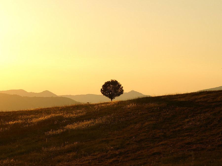 tree-189852_1280.jpg