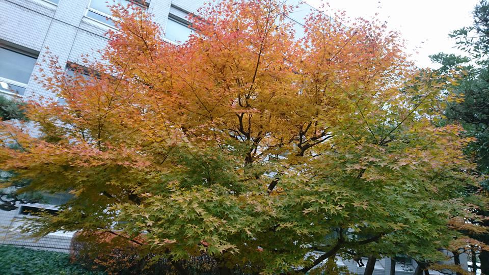 【紅葉につつまれて、朝のジョギング】-3