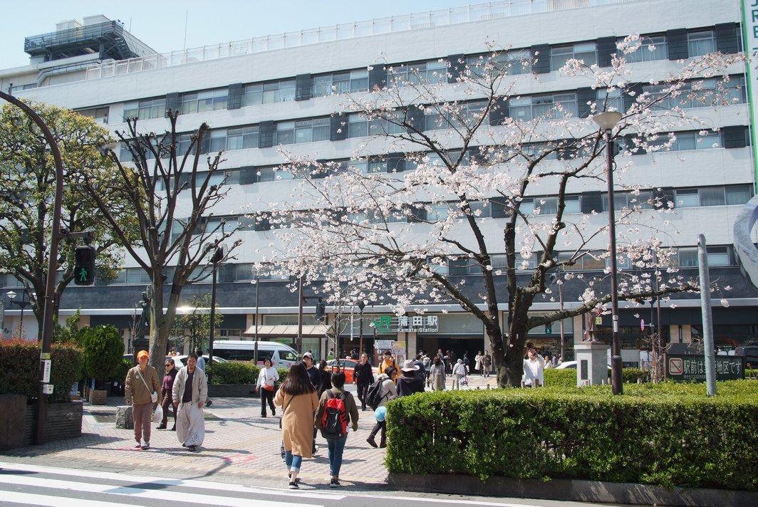 18sakura8.jpg