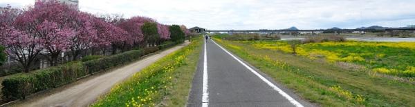 1陽光桜180322