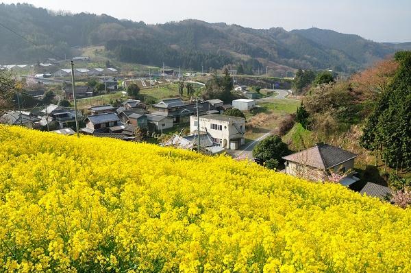 2黄色の丘180326