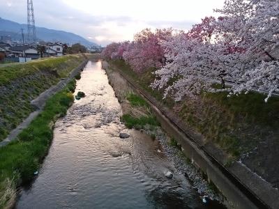 芸術の小径 桜①