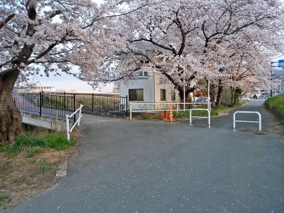 飯田河原古戦場 桜