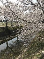 kumokawa201841.jpg