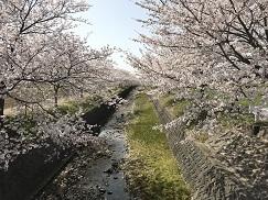 kumokawa201842.jpg