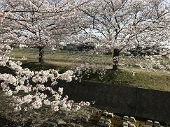 kumokawa201845.jpg