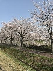 kumokawa201846.jpg