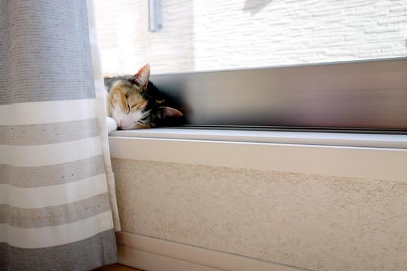 2018年3月・リビング・窓・猫①