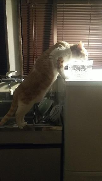 猫背も伸びるし