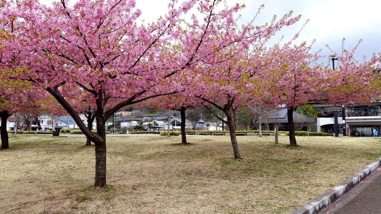 kawadu1802.jpg