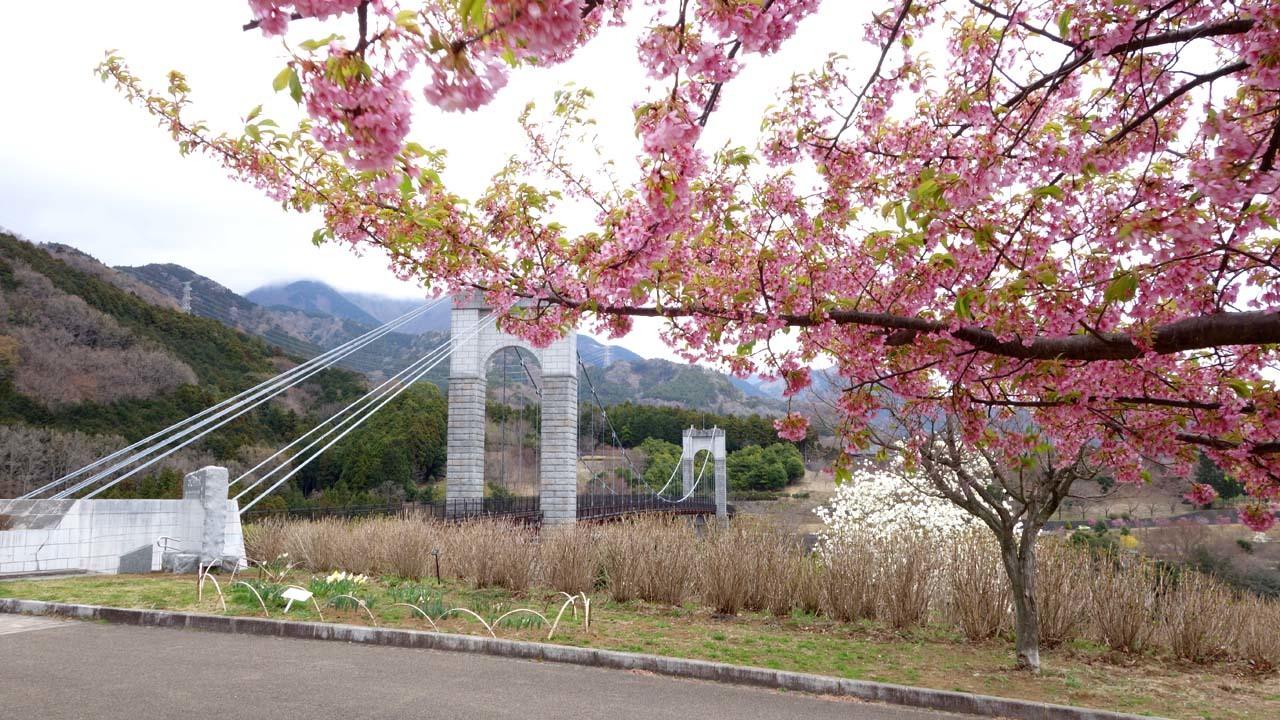 kawadu1803.jpg