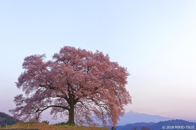 絶景探しの旅 - 0542 明け方のわに塚の一本桜 (山梨県 韮崎市)