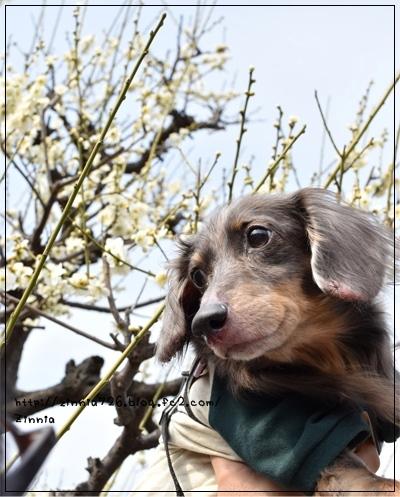 梅を見に♪4