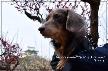 梅を見に♪1