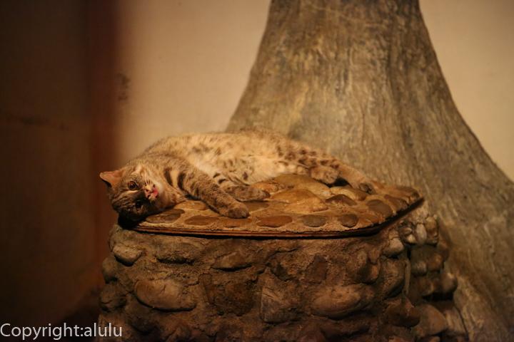 日本平動物園 アムールヤマネコ 画像