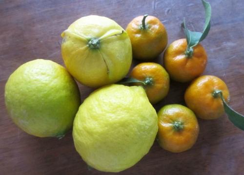 レモンとシークワ―サー